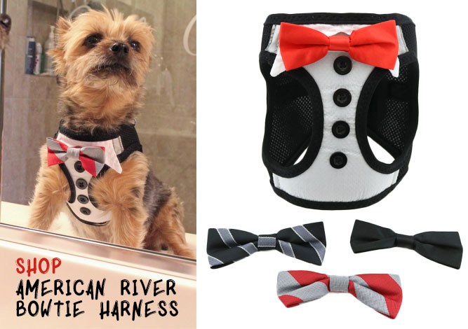 American River Bow Tie Harness